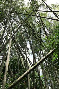 Jardín Botanico del Quindío