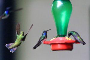 Kolibris im Botanischen Park von Quindío