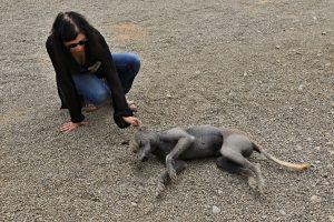 Peruanischer Nackthund , Birgit Knoblauch