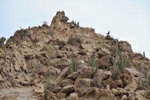Pyramiden von Túcume, Peru