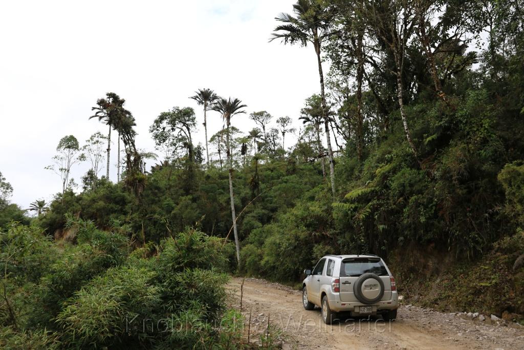 Parque Nacional Cutervo – der älteste Nationalpark Perus