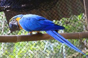 Centro de Rehabilitación y Conservación de Animales de Silvestres, Amazonas, Peru