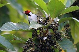 Nationalpark Tambopata, Puerto Maldonado, Amazonas, Peru