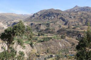Colca-Tal, Anden, Peru