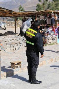 Maca, Anden, Peru