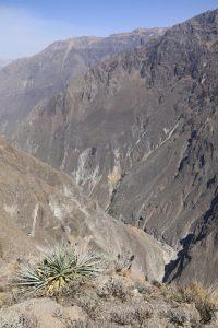 Cañon de Colca, Anden, Peru